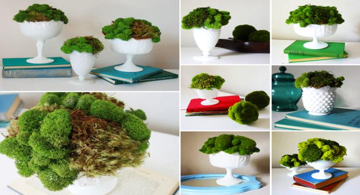 decoraciones musgos naturales verdes