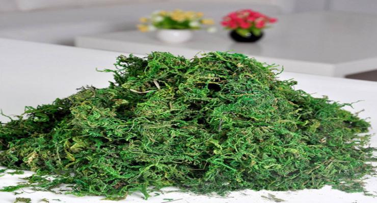 decorar musgos naturales verdes