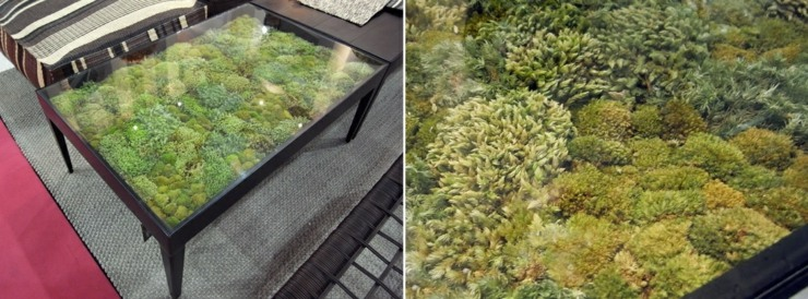 muebles decorados musgos naturales