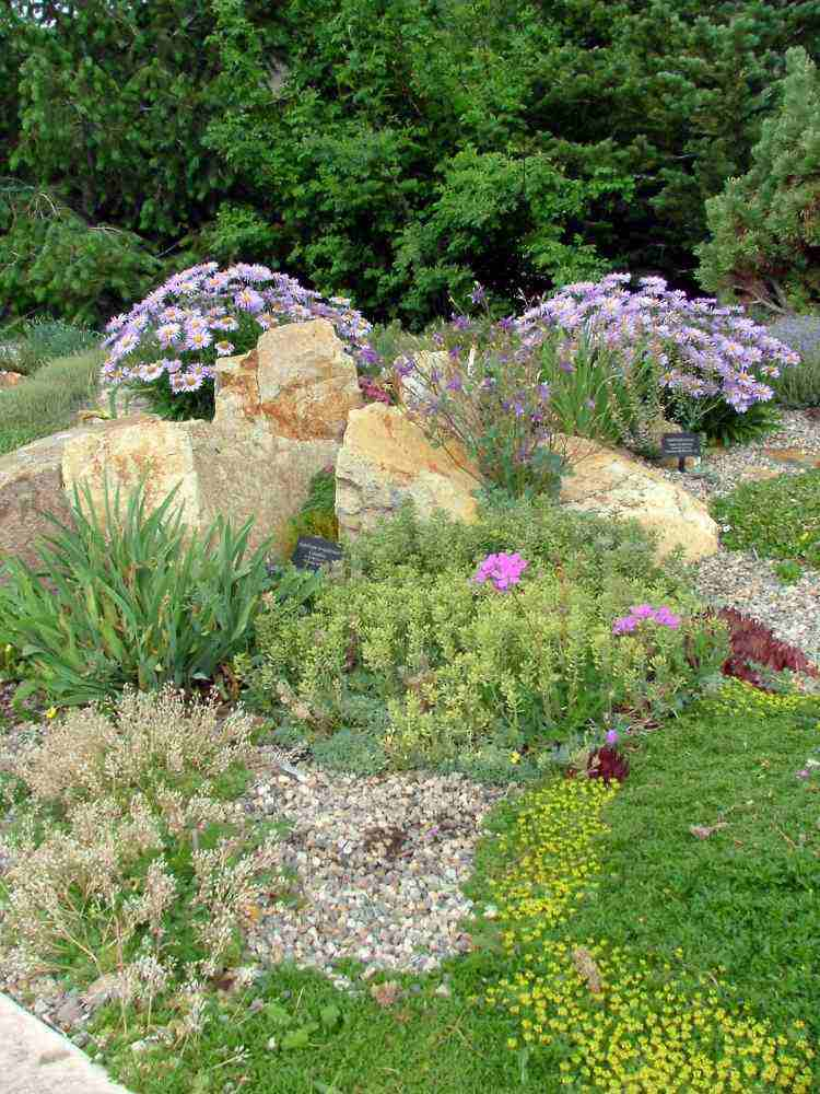 diseño paisaje jardín plantas arena
