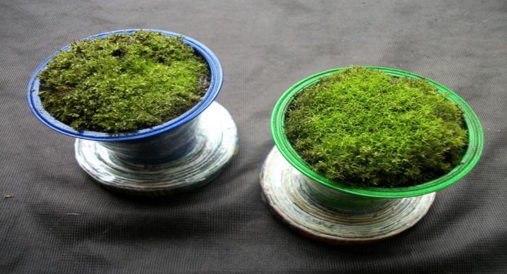 macetas decorativas musgos naturales