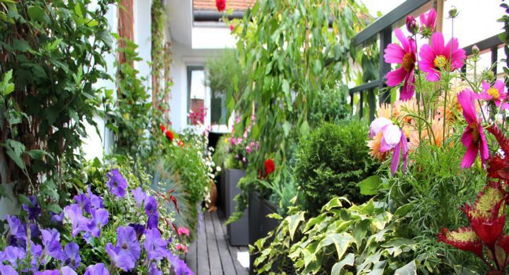 estupendo diseño plantas terraza