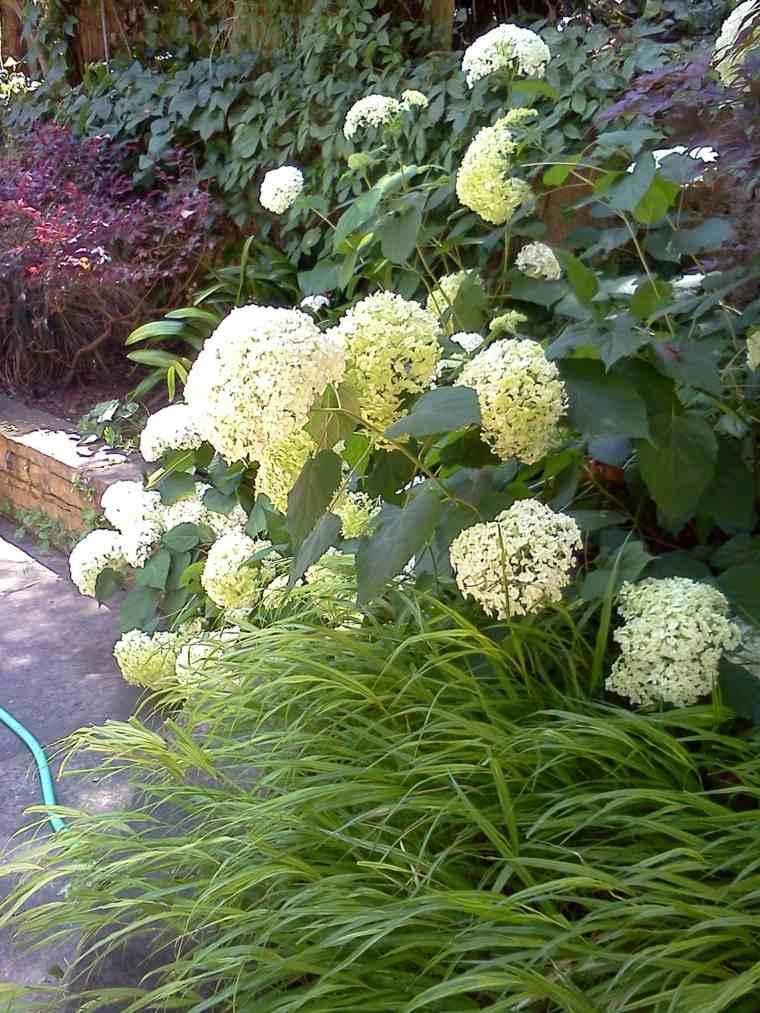 flores blancas jardin plantas opciones hierba montana japonesa ideas