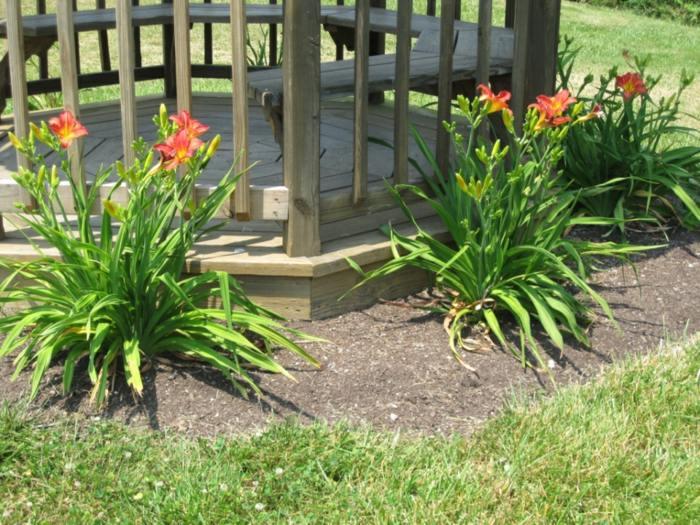 flores colores sala exteriores cesped color