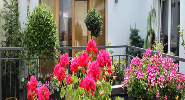 flores colores terrazas balcones