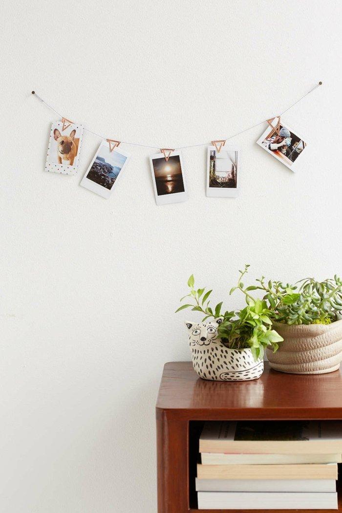 galeria de fotos estilos cuerdas plantas plantas