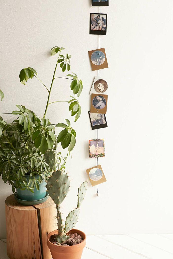 galeria de fotos macetas barro plantas cactus