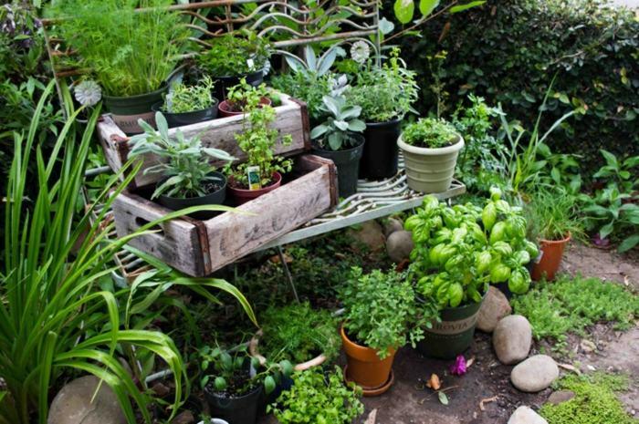 plantas cocinas especies salidas cajas