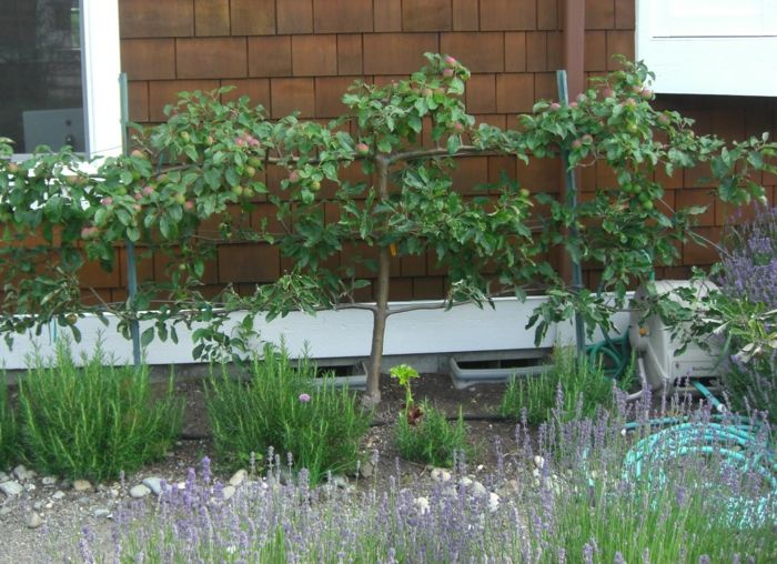huerto en casa sofisticados paredes manzanos