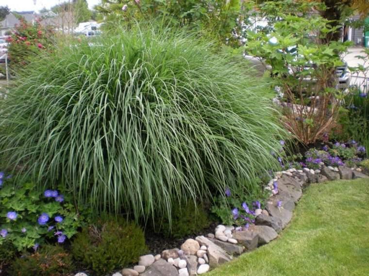 Jardin japones ideas de hierba japonesa de monta a - Como plantar cesped en el jardin ...