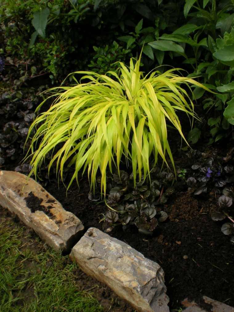 jardin japones opciones hierba montana jardin ideas