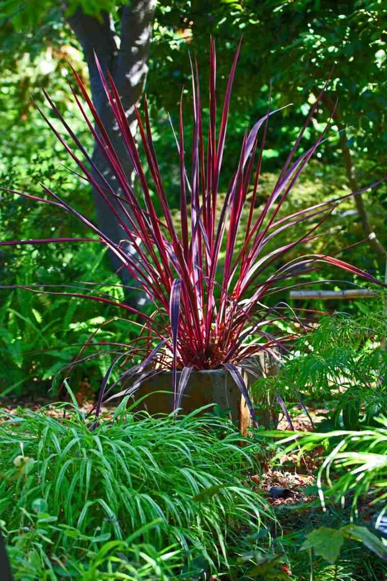 jardin japones opciones hierba montana maceta ideas