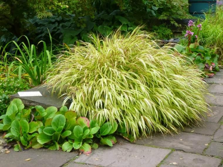 jardin japones opciones hierba montana plantas ideas