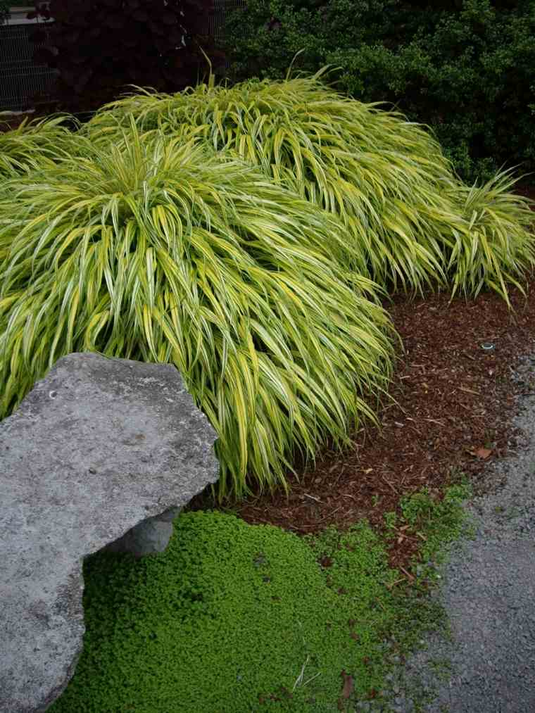 jardin japones opciones hierba montana verde ideas