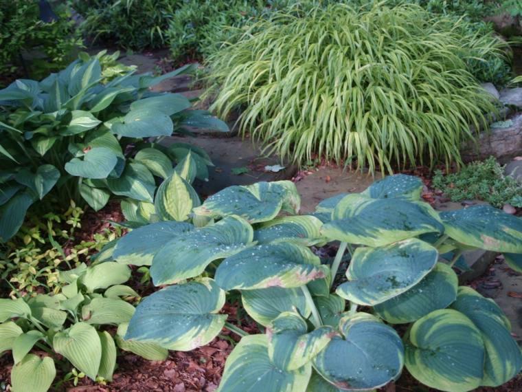 jardin opciones hierba japonesa montana ideas