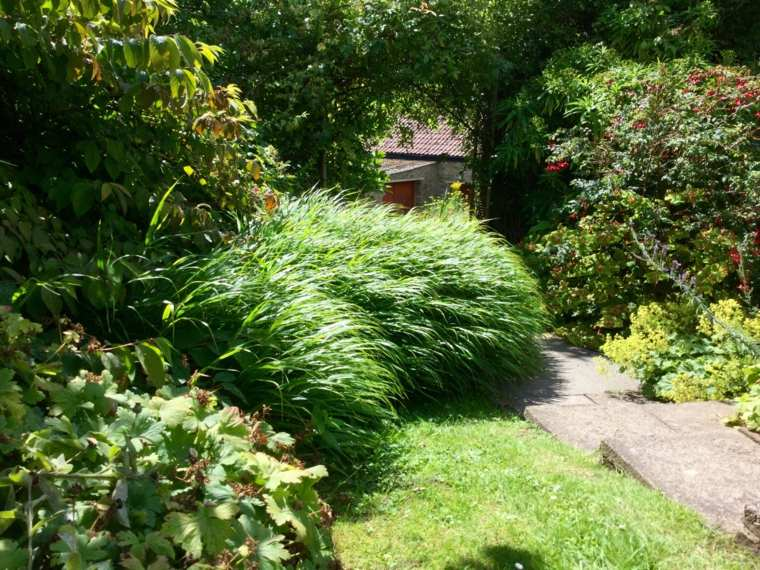 jardin plantas hierba montana japonesa cesped ideas