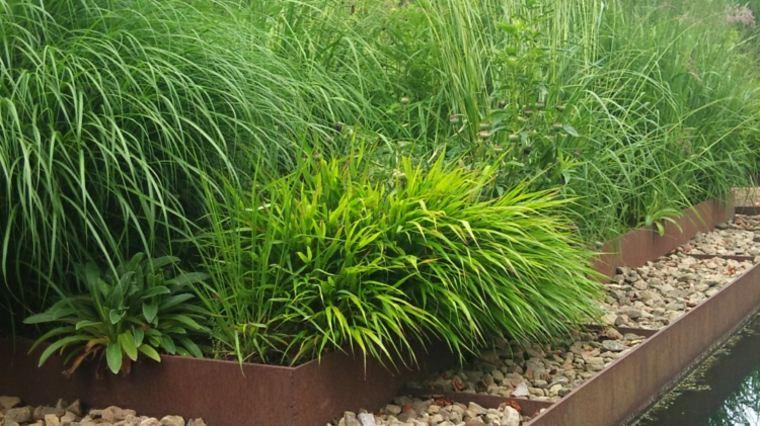 jardin plantas opciones hierba montana japonesa acero corten ideas