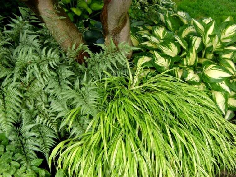 jardin plantas opciones hierba montana japonesa arbol ideas