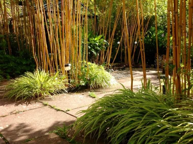 jardin plantas opciones hierba montana japonesa bambu ideas