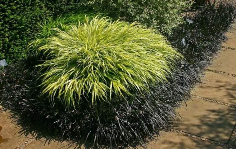 jardin plantas opciones hierba montana japonesa bonita ideas