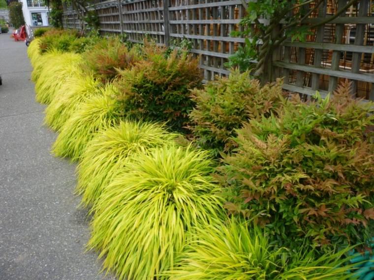 jardin plantas opciones hierba montana japonesa camino valla ideas
