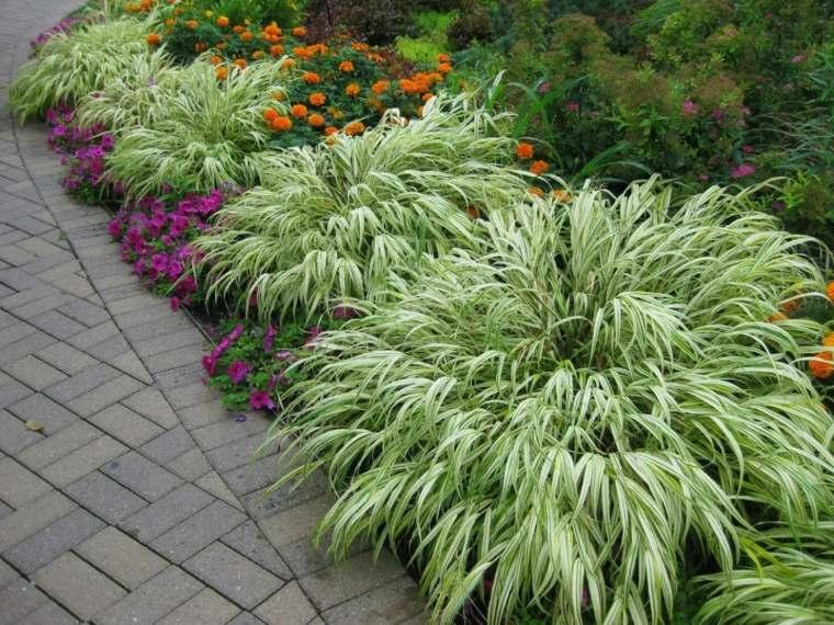 jardin plantas opciones hierba montana japonesa camino ideas
