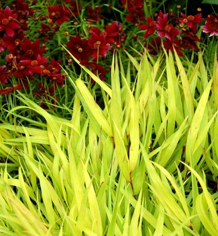 jardin plantas opciones hierba montana japonesa destaca ideas