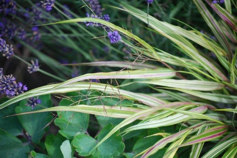 jardin plantas opciones hierba montana japonesa flores ideas