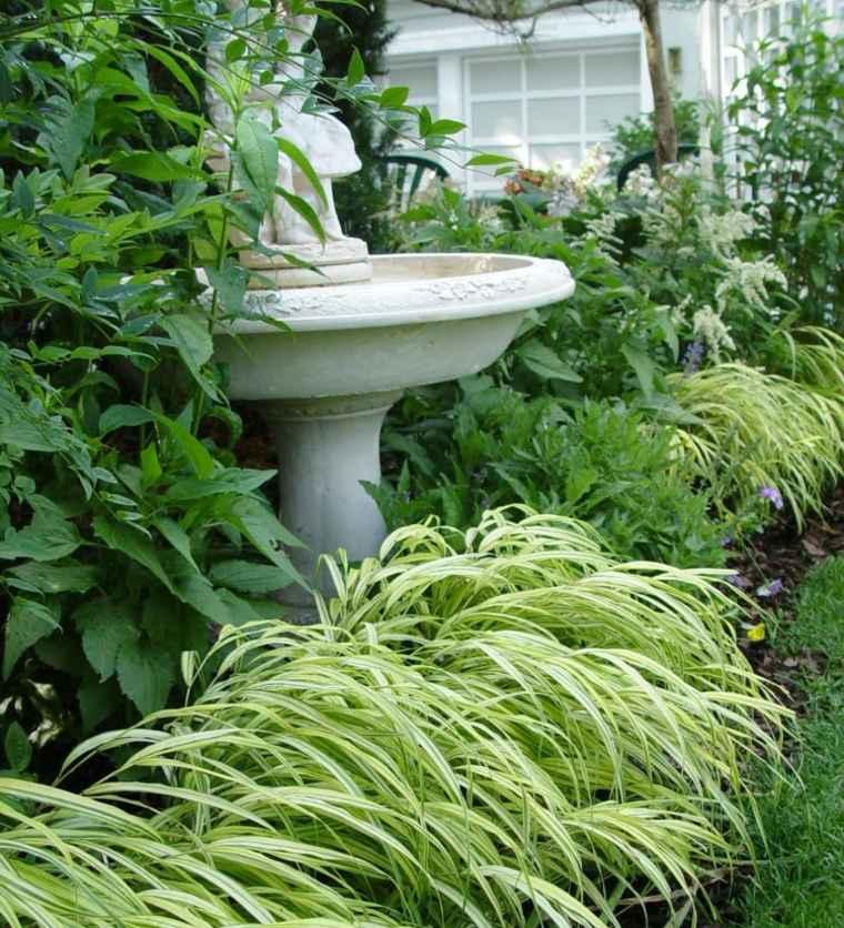 jardin plantas opciones hierba montana japonesa fuente ideas