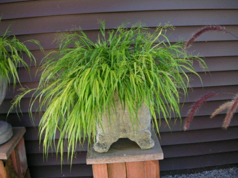 jardin plantas opciones hierba montana japonesa maceta piedra ideas
