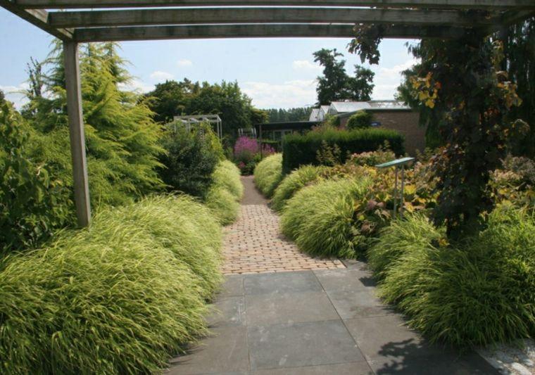 jardin plantas opciones hierba montana japonesa pergola ideas
