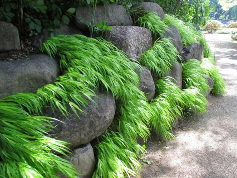 jardin plantas opciones hierba montana japonesa piedras grandes ideas