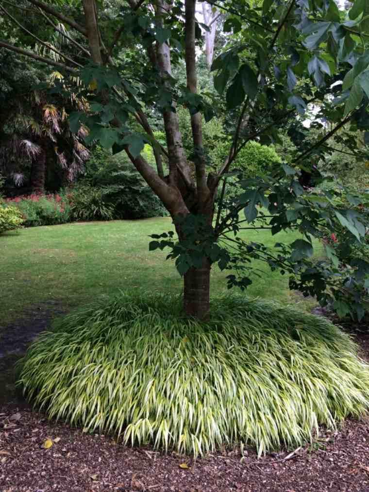 jardin plantas opciones hierba montana japonesa rodea arbol ideas