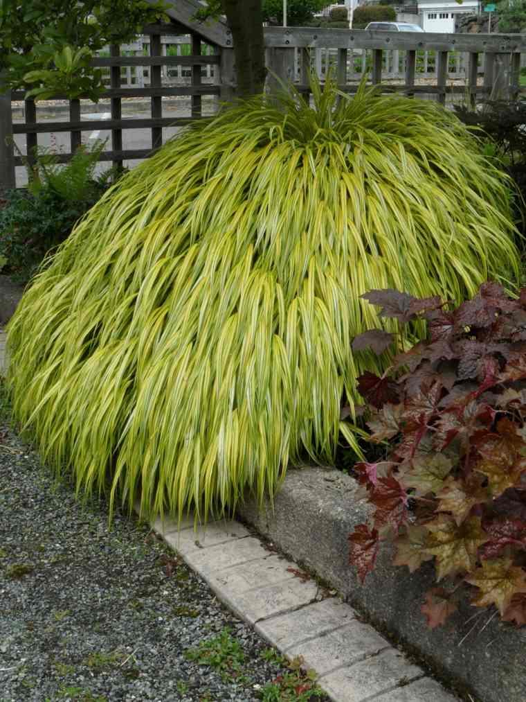 jardin plantas opciones hierba montana japonesa valla ideas