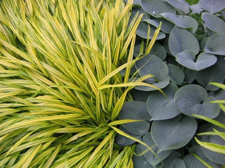 jardin plantas opciones hierba montana japonesa verde ideas
