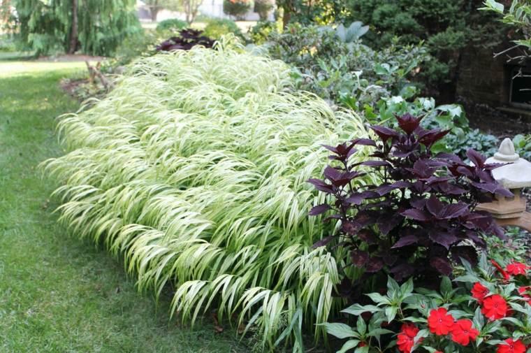 jardin plantas opciones hierba montana japonesa ideas