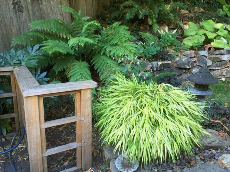 jardin plantas opciones hierba montana ideas