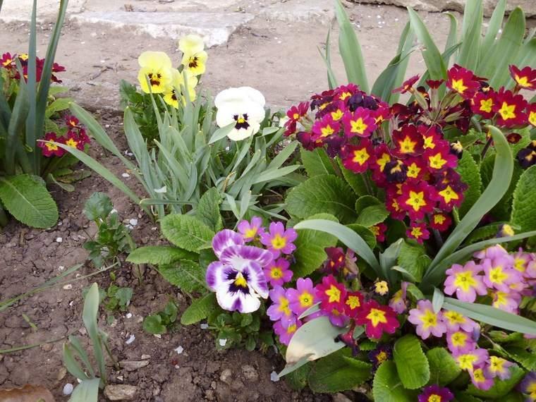 jardineria-paisajismo-flores-primavera-colores