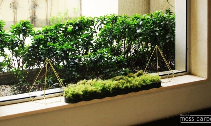 macetas pequeñas decorativas plantas