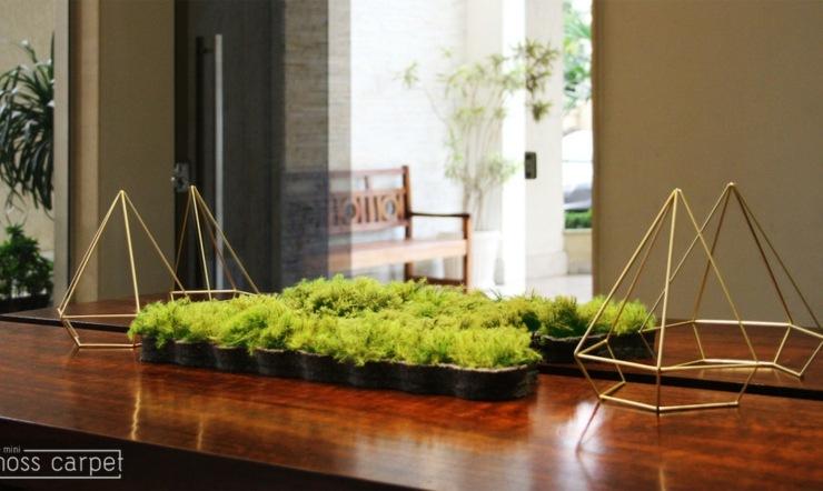 macetas decorativas plantas musgos