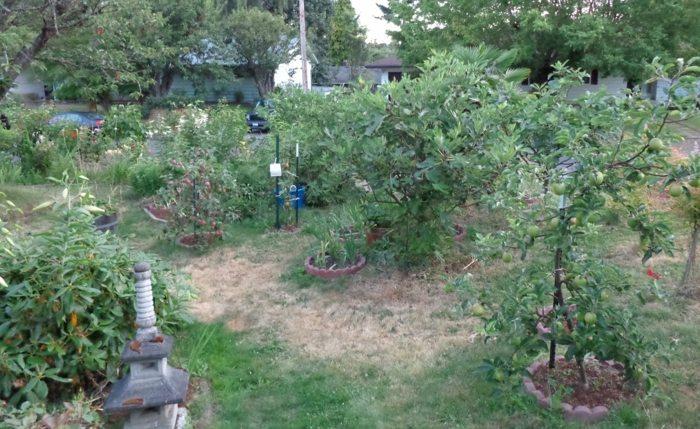 manzanas casas nudos muelas hierbas