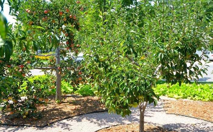 manzanos plantas salones puertas manzanas