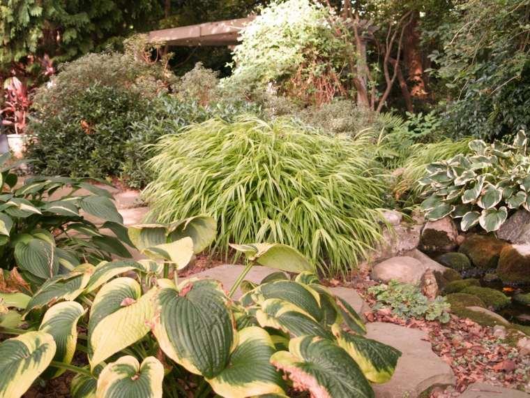 opciones jardin plantas hierba montana japonesa ideas