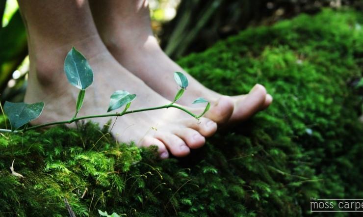 musgos naturales decoración bienestar