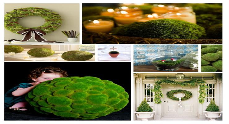 ideas originales decorar musgos