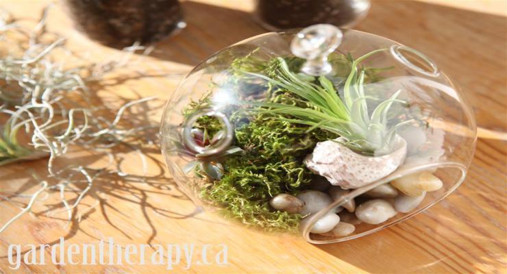 terrarios decoración natural plantas