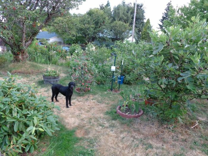 perro huereto soluciones paredes frutas