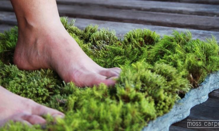 planta alfombras interiores naturales