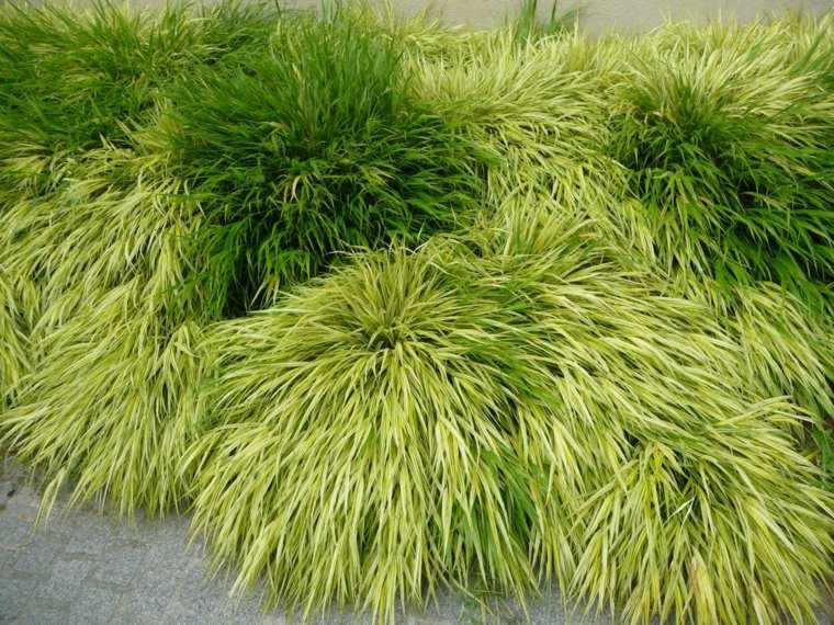 plantas japonesas jardin opciones hierba montana ideas