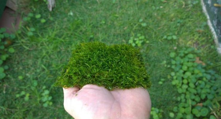 trozo parcela musgos verdes